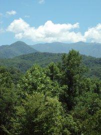 góry, drzewa, las